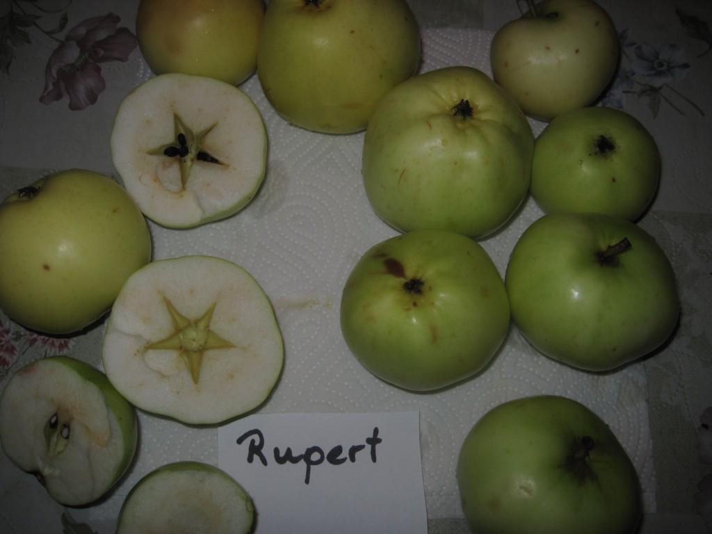 Rupertbordet_1581